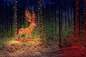 Fantastischer_Wald_der_Rura_Hirsch