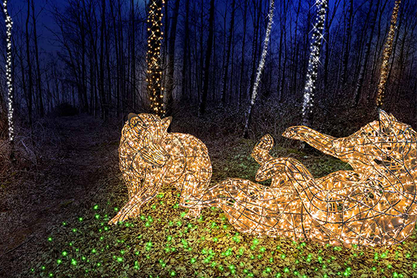 Magischer_Wald_der_Tiere
